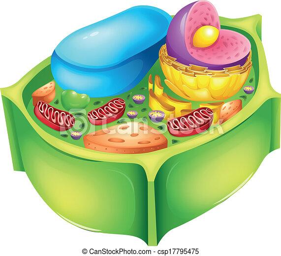 vectors illustration of plant cell illustration of a. Black Bedroom Furniture Sets. Home Design Ideas
