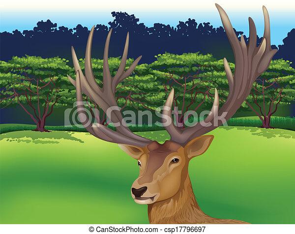 Deer - csp17796697