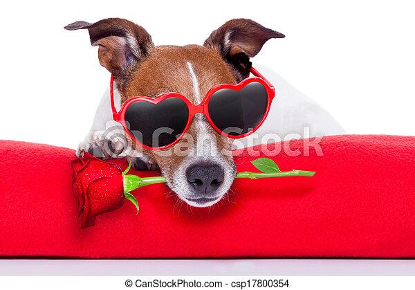 valentines, Dia, cão - csp17800354