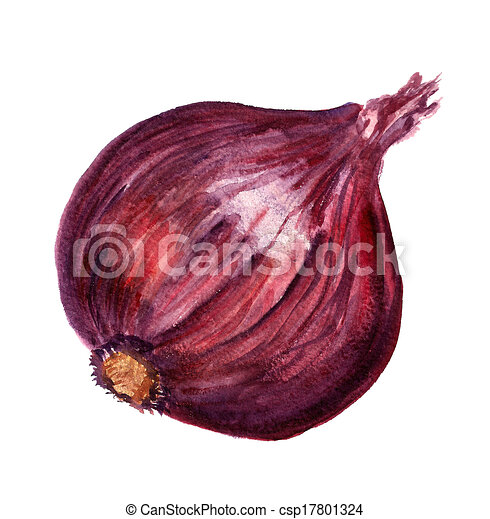 Clip Art of Red onion - Watercolor image of red large ...