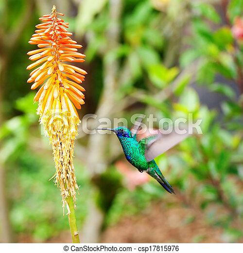 image de beau bleu vert colibri voler sur exotique orange csp17815976 recherchez. Black Bedroom Furniture Sets. Home Design Ideas