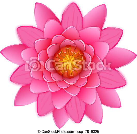 Pink Lotus Drawing Beautiful Pink Lotus or