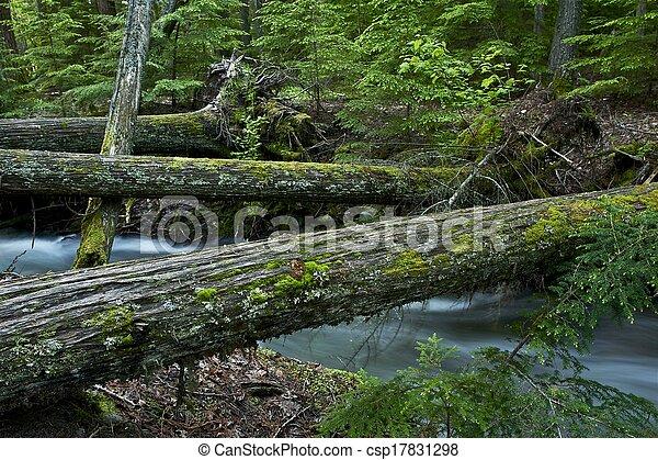 Natural Wood Bridges - csp17831298