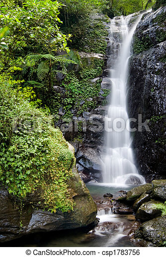 Forest  Waterfall - csp1783756