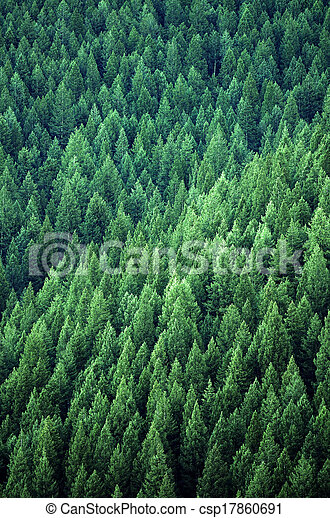 Forest of Pine Trees - csp17860691