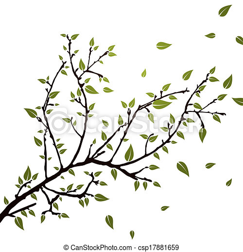 Branch with leaves - csp17881659
