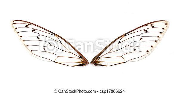 cicada wings. - csp17886624