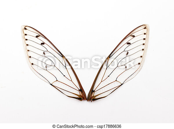 cicada wings. - csp17886636