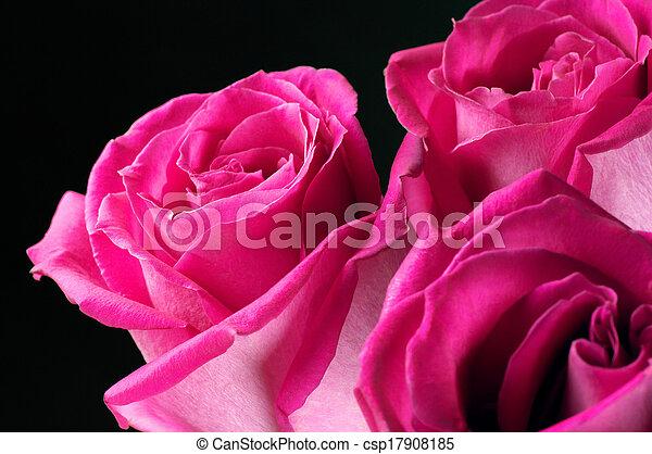 bilder von lila rosen nahaufnahme schwarz hintergrund. Black Bedroom Furniture Sets. Home Design Ideas