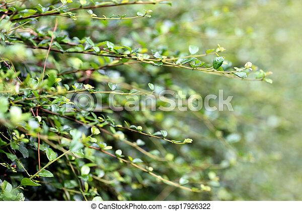 Photo vert arbre int rieur limite mur image images photo libre de droits photos sous - Mur en limite de propriete droit ...