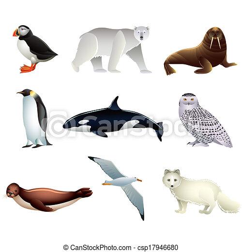Arctic animals vector set - csp17946680