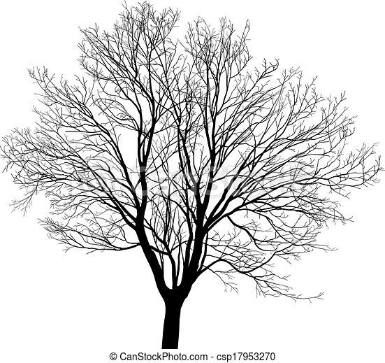 Maple Tree Black And White Drawing Silhouette Maple Tree Black