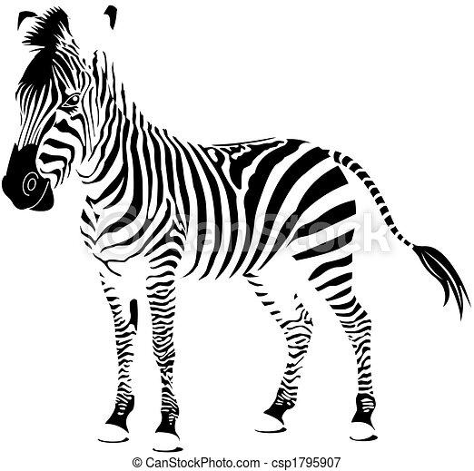 Zebra white - csp1795907
