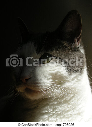 Grey and White Cat - csp1796026