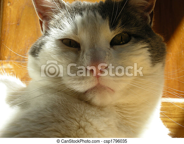 Grey and White Cat  - csp1796035