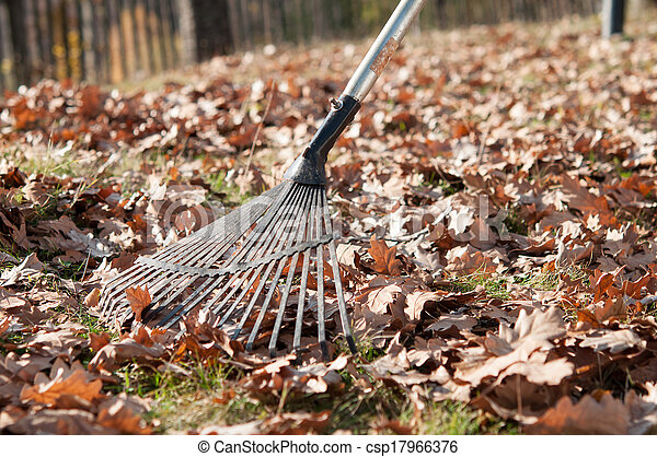 Cleaning with rake of autumn leaves in park - csp17966376