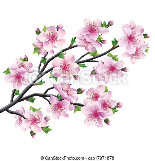 Japanese Tree Sakura Pink Cherry Blossom Isolated On White Background