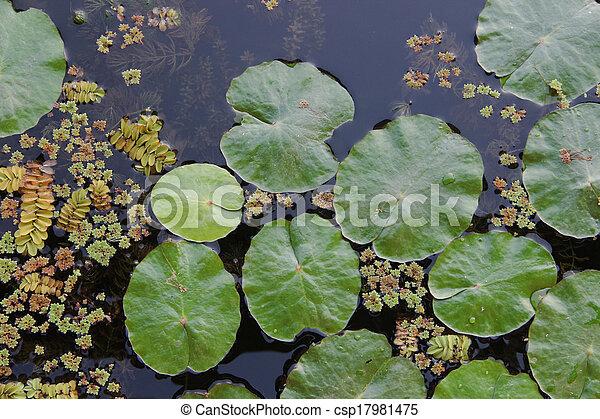 Image de lotus feuille aquatique plante lac lotus for Plante verte japonaise