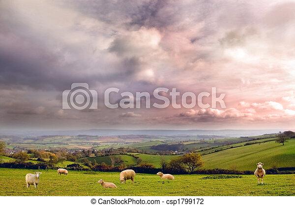 Rural Landscape - csp1799172