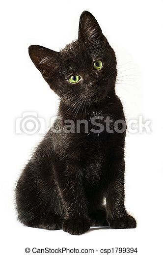 Black Kitten - csp1799394