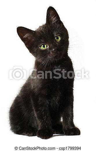 Black Kitten - csp1799394