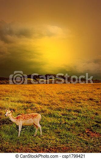 sunset over rural landscape - csp1799421