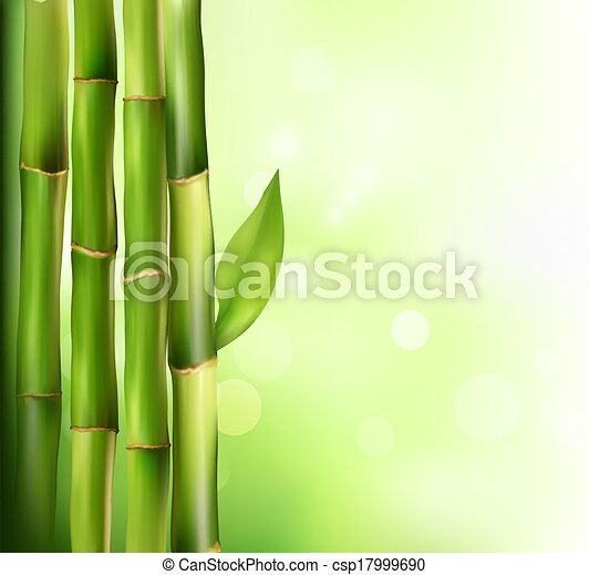 Bamboo background. Vector illustration. - csp17999690