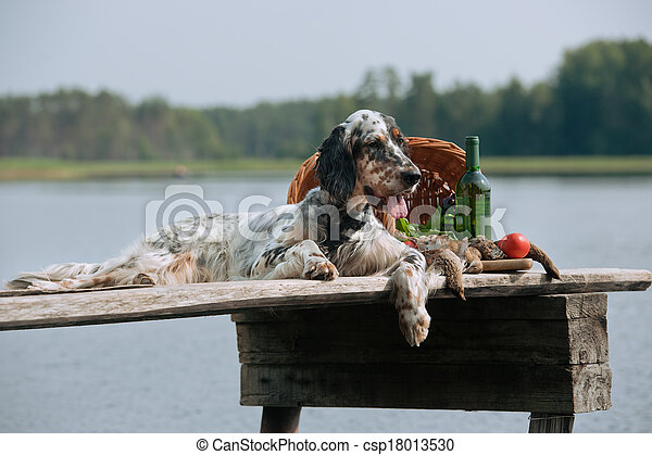 English setter with hunting birds - csp18013530