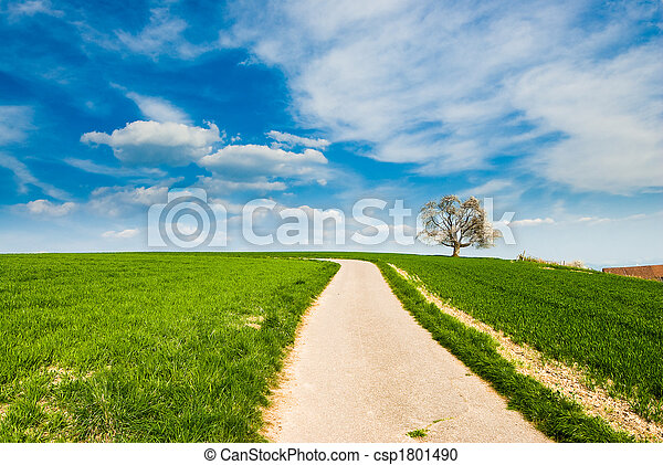 dirt road with tree - csp1801490