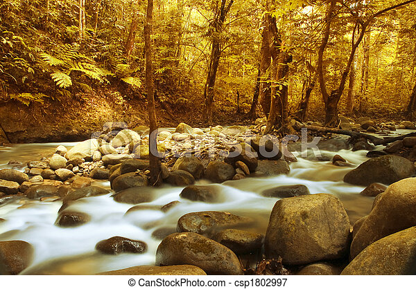 Autumn forest stream - csp1802997