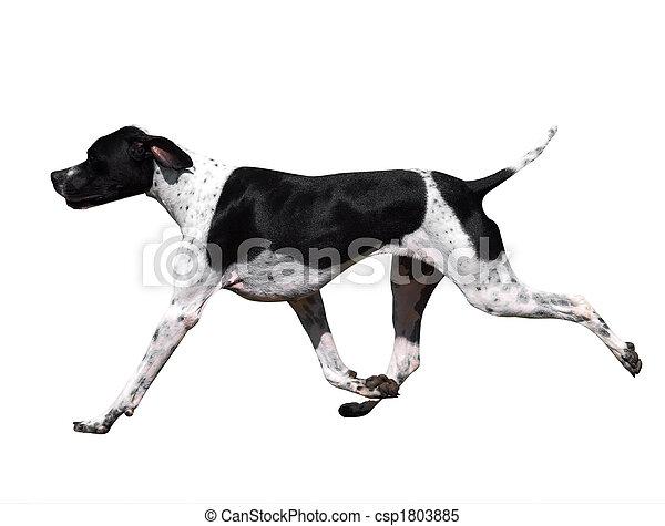 Black and White Pointer - csp1803885