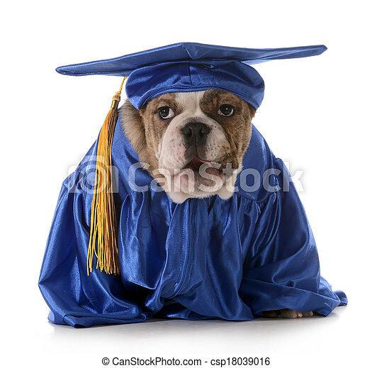 子犬, 服従 - csp18039016 - 子犬, 服従子犬, 服従, -, 英語, ブルドッ