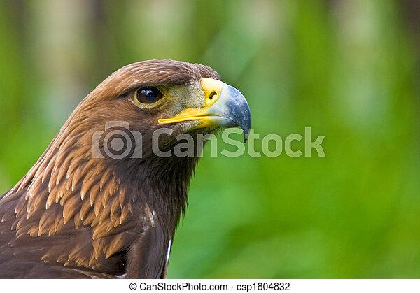 Alert Bird of Prey - csp1804832