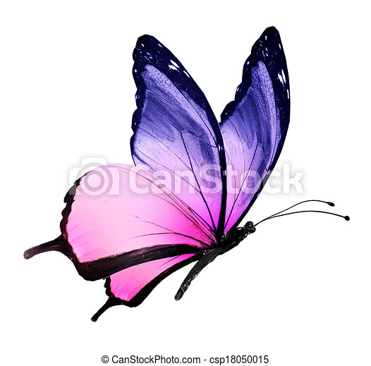 real-purple-butterflies