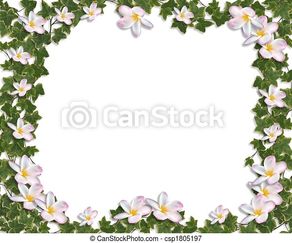Frangipani Tropical Spa Flower. Plumeria Border Design Royalty ...