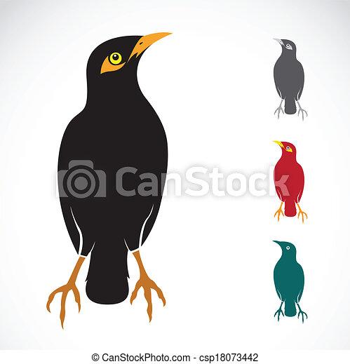 Myna Bird Images Vector Image of an Myna Bird