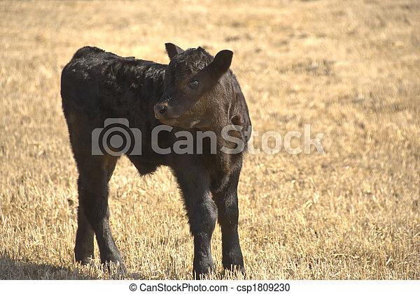 black calf - csp1809230