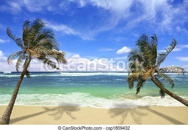 isla, playa, hawai, pardise - csp1809432