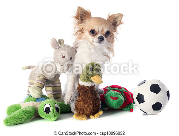 chihuahua and toys - csp18096032