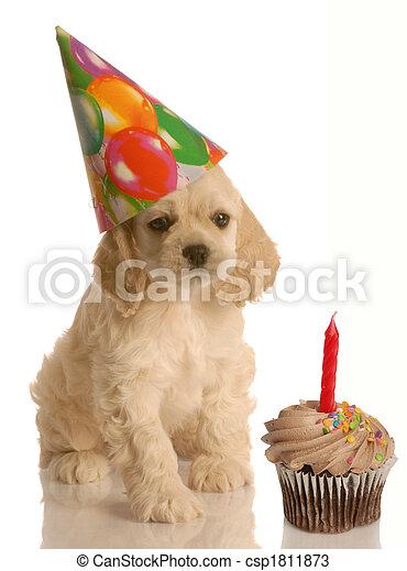 puppy birthday - csp1811873