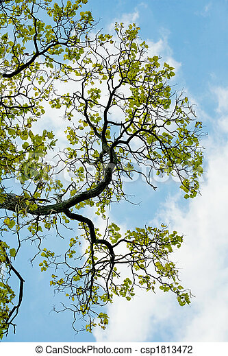 Summer Trees - csp1813472