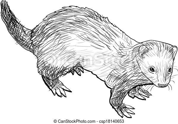 Vecteur clipart de dessin furet mammif re appartenir - Dessin de belette ...