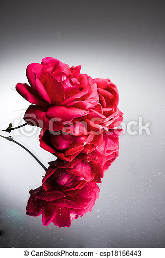 Flower on Neutral background