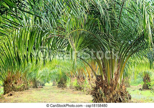 Oil Palm Plantation - csp18158480