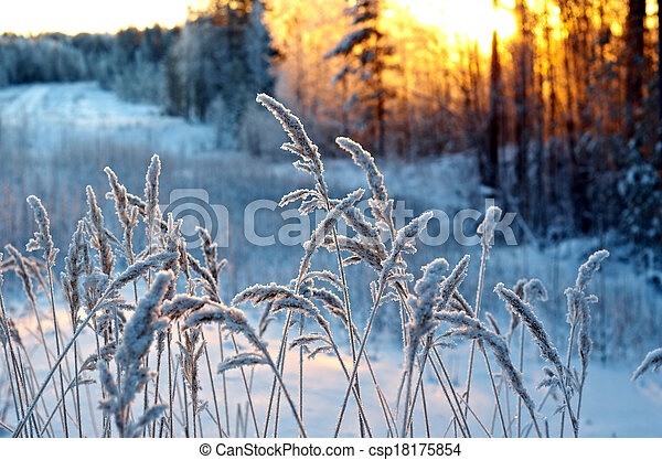 Winter scene - csp18175854
