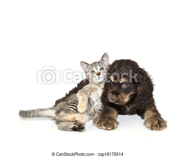 Very SweetPuppy and Kitten
