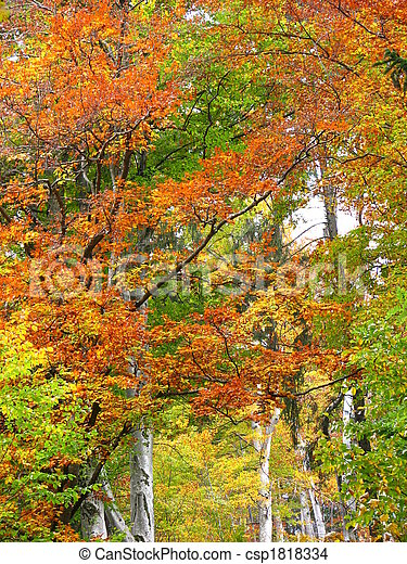 colors of fall - csp1818334