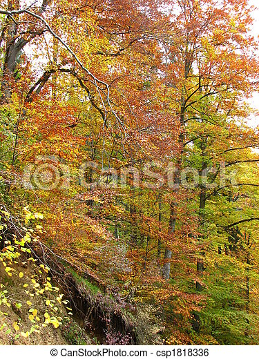colors of fall - csp1818336