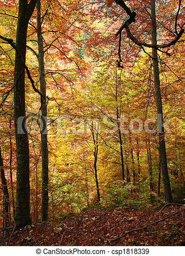 colors of fall - csp1818339