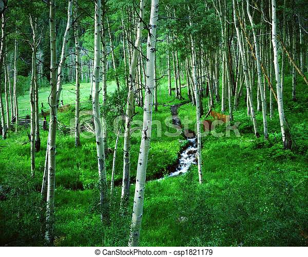 Aspen Grove and Ranch, Maroon Bells Wilderness Area, Colorado - csp1821179